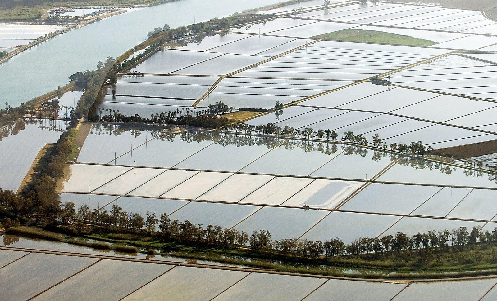 Vista aèria del Delta de l'Ebre amb els camps d'arròs anegats. Fotografia de Xavier Jubierre.